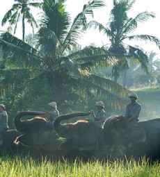 elephant-ride-bali-featured