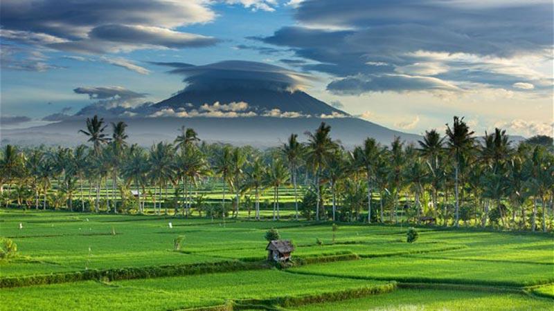 bali rice field trek