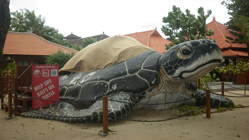 bali kuta sea turtle conservation