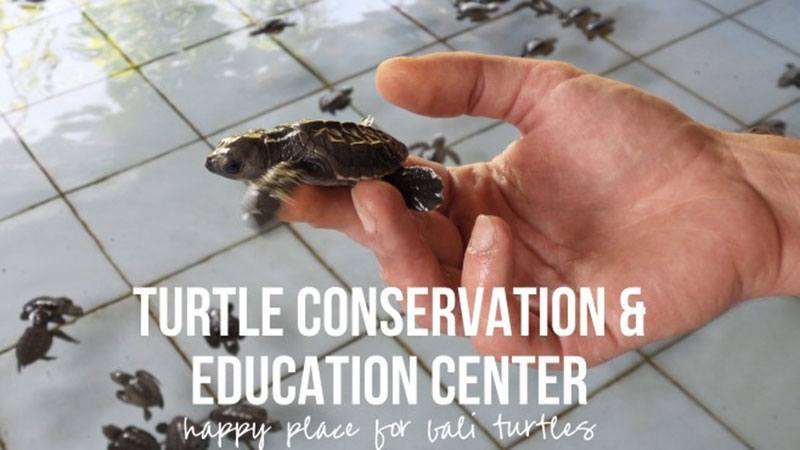 bali turtle conservation center
