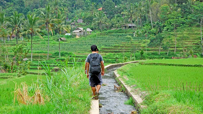 Bali must try activities: Hiking rice fields