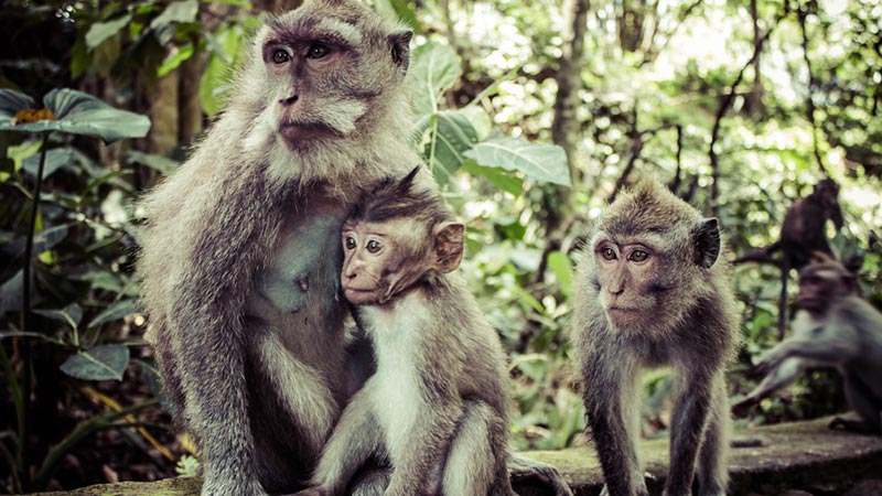 Bali with kids: A family at Monkey Forest Sanctuary in Ubud