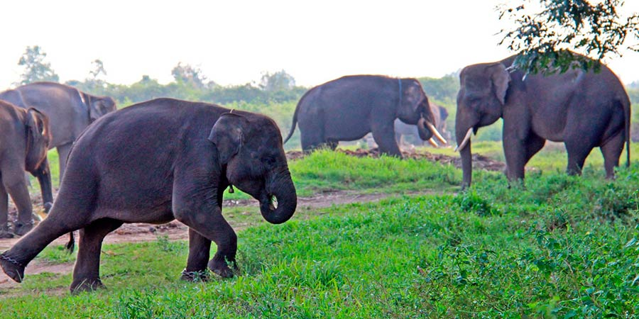 National parks in Indonesia: Way Kambas is home to Sumatran elephants