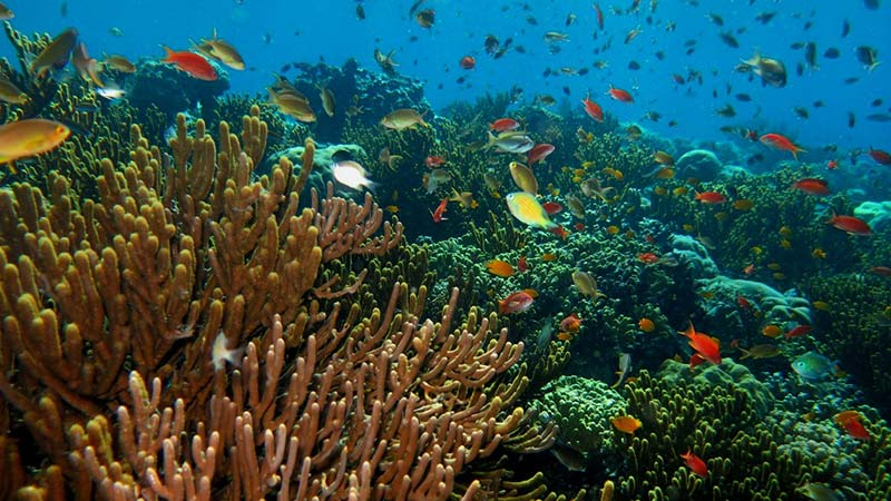 National parks in Indonesia: Underwater life at West Bali National Park