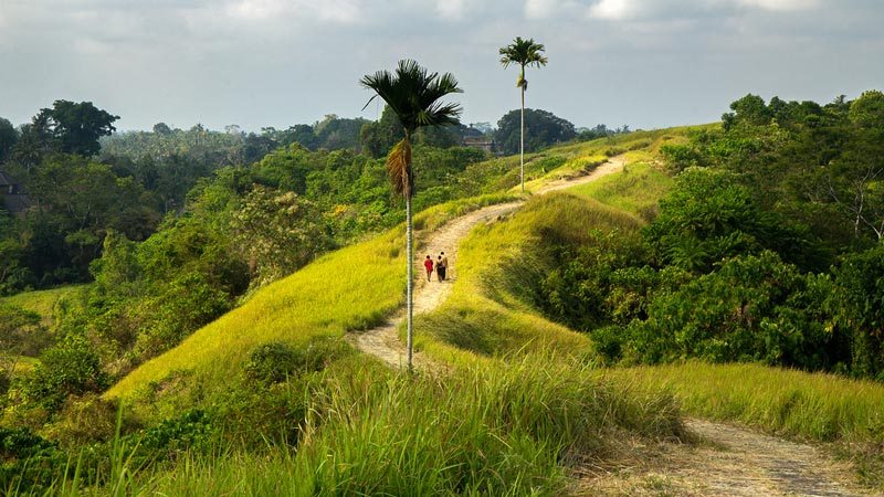 Rice fields Bali: Campulan ridge walk is a popular hiking trail in Ubud
