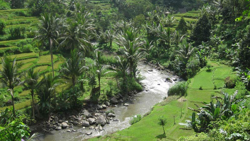 Rice fields Bali: Payangan rice terraces lead into river Ayung