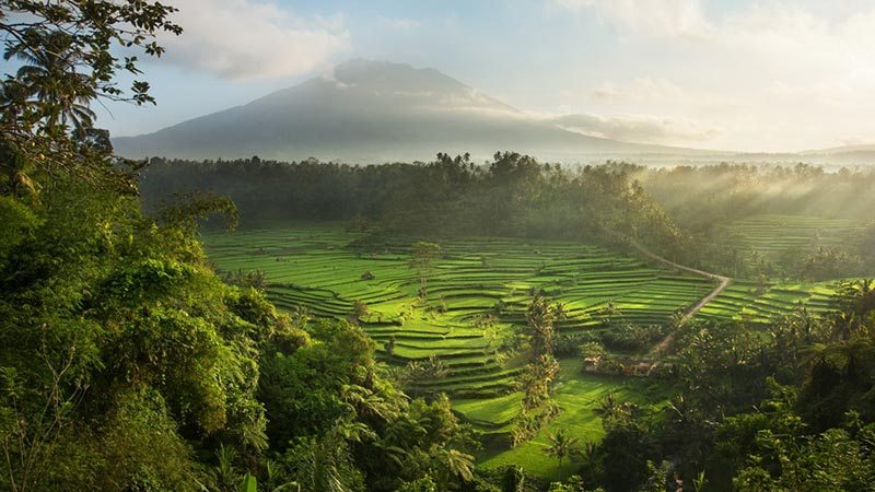 Rice fields Bali: 1,5 hour drive from Kuta takes you to Sidemen valley rice fields