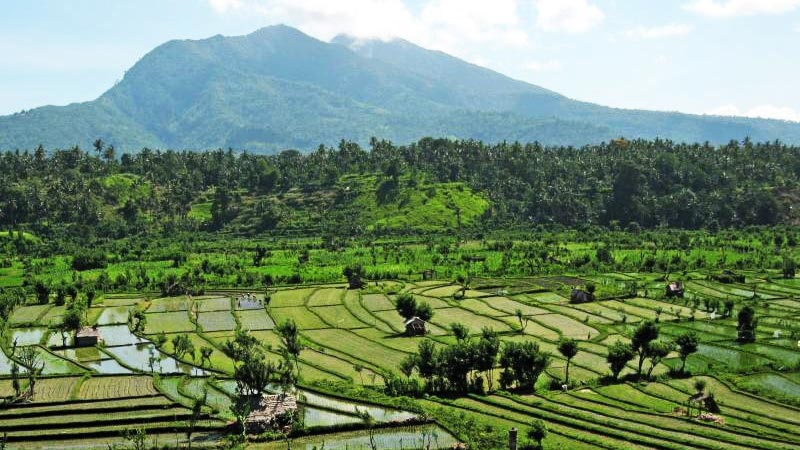 Rice fields Bali: Join a guided rice field trek around Tirta Gangga